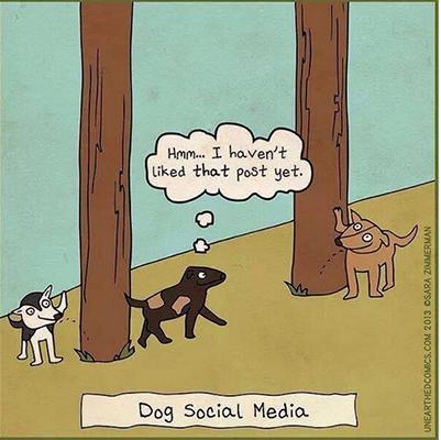 Dog Social Media 400x400